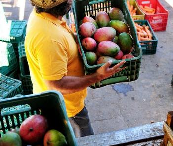 estados-aderem-a-sistema-nacional-de-seguranca-alimentar