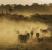 Gado em pasto de fazenda próxima a Alta Floresta, no Mato Grosso | Lalo de Oliveira / Folhapress