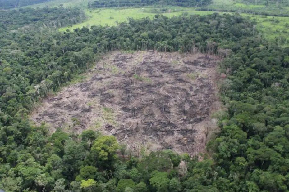 Desmatamento na Amazônia Foto: Lourival Sant'Anna/Estadão