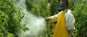 Homem aplica agrotóxico em plantação em Paty do Alferes   Foto: Mônica Imbuzeiro / Agência O Globo/25-8-2004